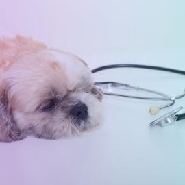 Enfermedad del Gusano del Corazón en Perros: Múltiples Biomarcadores para un Diagnóstico Oportuno