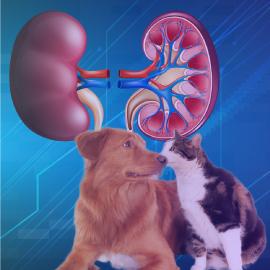 Herramientas para el diagnóstico de enfermedad renal en Medicina Veterinaria